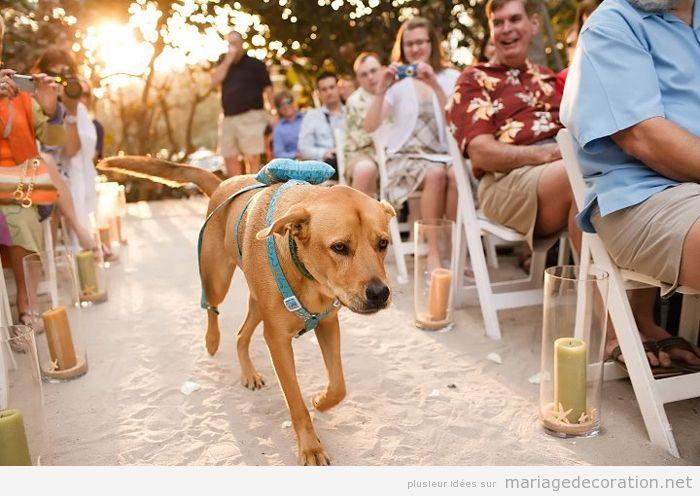 Idées déco mariage dog friendly ou avec chiens 6