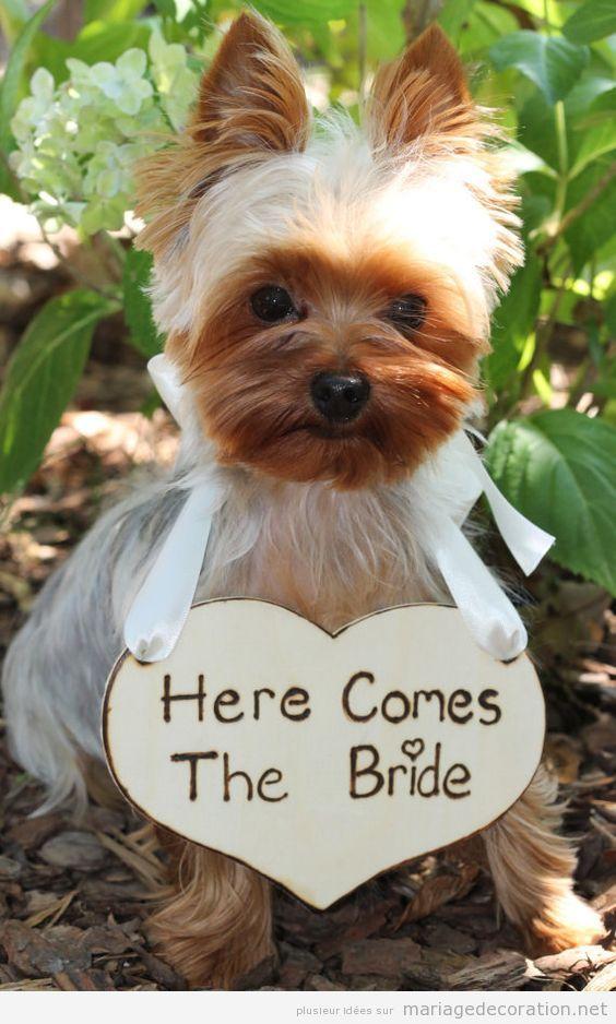 Idées déco mariage dog friendly ou avec chiens 3