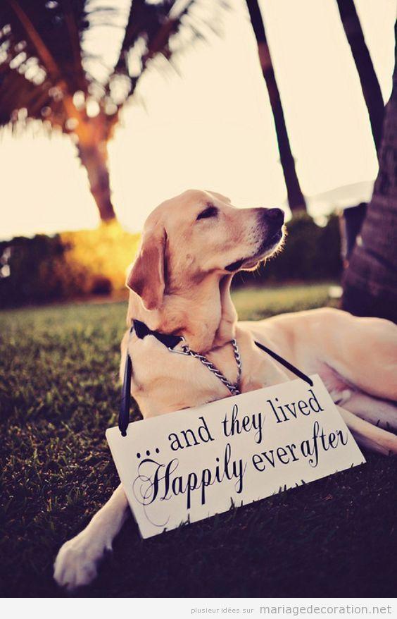 Idées déco mariage dog friendly ou avec chiens