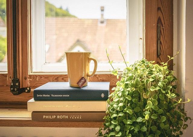 Plantes pour décorer la maison